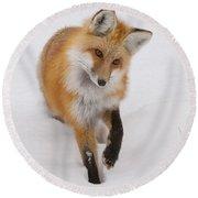 Red Fox Portrait Round Beach Towel