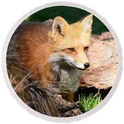 Red Fox On Patrol Round Beach Towel
