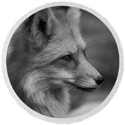 Red Fox Portrait In Black And White Round Beach Towel