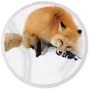 Red Fox To Base Round Beach Towel