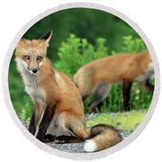 Red Foxes In The Rain Round Beach Towel