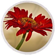 Red Gerbera Two Round Beach Towel
