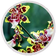 Striped Maroon And Yellow Orchid Round Beach Towel