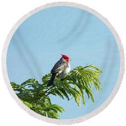 Red-headed Cardinal On A Branch Round Beach Towel