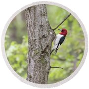 Red-headed Woodpecker 2017-2 Round Beach Towel by Thomas Young