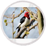 Round Beach Towel featuring the photograph Red-headed Woodpecker At A Glace  by Ricky L Jones