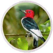 Red-headed Woodpecker Portrait Round Beach Towel