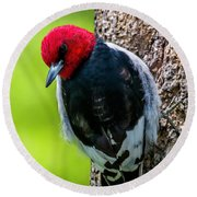 Red-headed Woodpecker Round Beach Towel