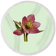 Round Beach Towel featuring the photograph Red Hellebore Green Background by Paul Gulliver