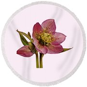 Round Beach Towel featuring the photograph Red Hellebore Transparent Background by Paul Gulliver