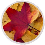 Round Beach Towel featuring the photograph Red Leaf by Chevy Fleet