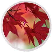 Round Beach Towel featuring the photograph Red Leaves by Clare Bambers