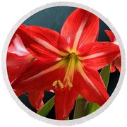 Red Lily Flower Trio Round Beach Towel
