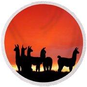 Red Llama Sunset 1 Round Beach Towel
