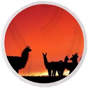 Red Llama Sunset 2 Round Beach Towel