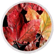 Round Beach Towel featuring the photograph Red Maple Leaves Digital Painting by Barbara Griffin