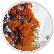 Red-orange Fall Tree Round Beach Towel