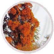 Red-orange Fall Tree Round Beach Towel by Craig Walters