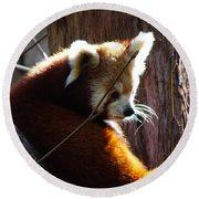 Round Beach Towel featuring the photograph Red Panda by Angela DeFrias