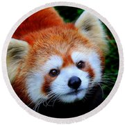 Round Beach Towel featuring the photograph Red Panda by Davandra Cribbie