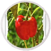 Red Pepper On The Vine Round Beach Towel