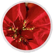 Round Beach Towel featuring the photograph Red Poinsettia Macro by Sally Weigand