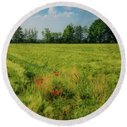 Red Poppies On A Green Wheat Field Round Beach Towel