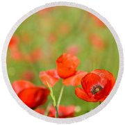 Red Poppy In A Field Of Poppies Round Beach Towel