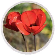 Red Poppy  Round Beach Towel