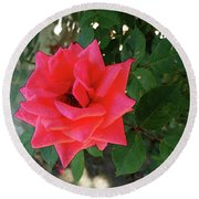 Pink Rose  Round Beach Towel by Don Pedro De Gracia