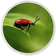 Red Scarlet Lily Beetle On Plant Round Beach Towel