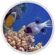 Red Sea Butterflyfish And Pufferfish Round Beach Towel