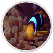 Red Sea Clownfish, Eilat, Israel 9 Round Beach Towel