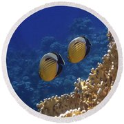 Red Sea Exquisite Butterflyfish 2 Round Beach Towel