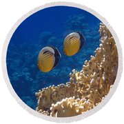 Red Sea Exquisite Butterflyfish  Round Beach Towel