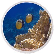 Red Sea Exquisite Butterflyfish  Round Beach Towel