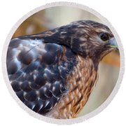 Round Beach Towel featuring the photograph Red Shouldered Hawk 2 by Chris Flees