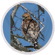 Round Beach Towel featuring the photograph Red Shouldered Hawk 2017 by Bill Wakeley