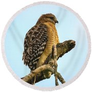 Red-shouldered Hawk - Buteo Lineatus Round Beach Towel