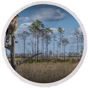Red Shouldered Hawk In The Florida Everglades Round Beach Towel