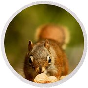 Red Squirrel   Round Beach Towel by Cale Best