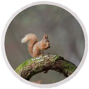 Red Squirrel Eating A Hazelnut Round Beach Towel