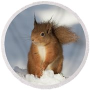 Red Squirrel In The Snow Round Beach Towel