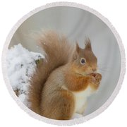 Red Squirrel In The Snow Side On Round Beach Towel