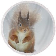 Red Squirrel In Winter Round Beach Towel