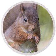 Red Squirrel - Scottish Highlands #1 Round Beach Towel