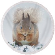Red Squirrel Nibbles A Nut In The Snow Round Beach Towel