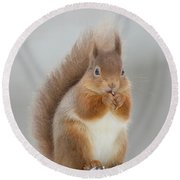 Red Squirrel Nibbling A Hazelnut In The Snow Round Beach Towel