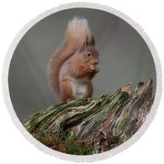 Red Squirrel Nibbling A Nut Round Beach Towel