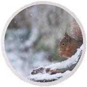 Red Squirrel On Snowy Stump Round Beach Towel